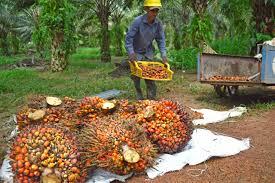 Palmolie of Palmvet
